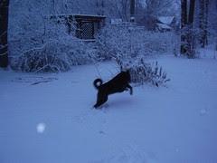 cody backyard snow 007