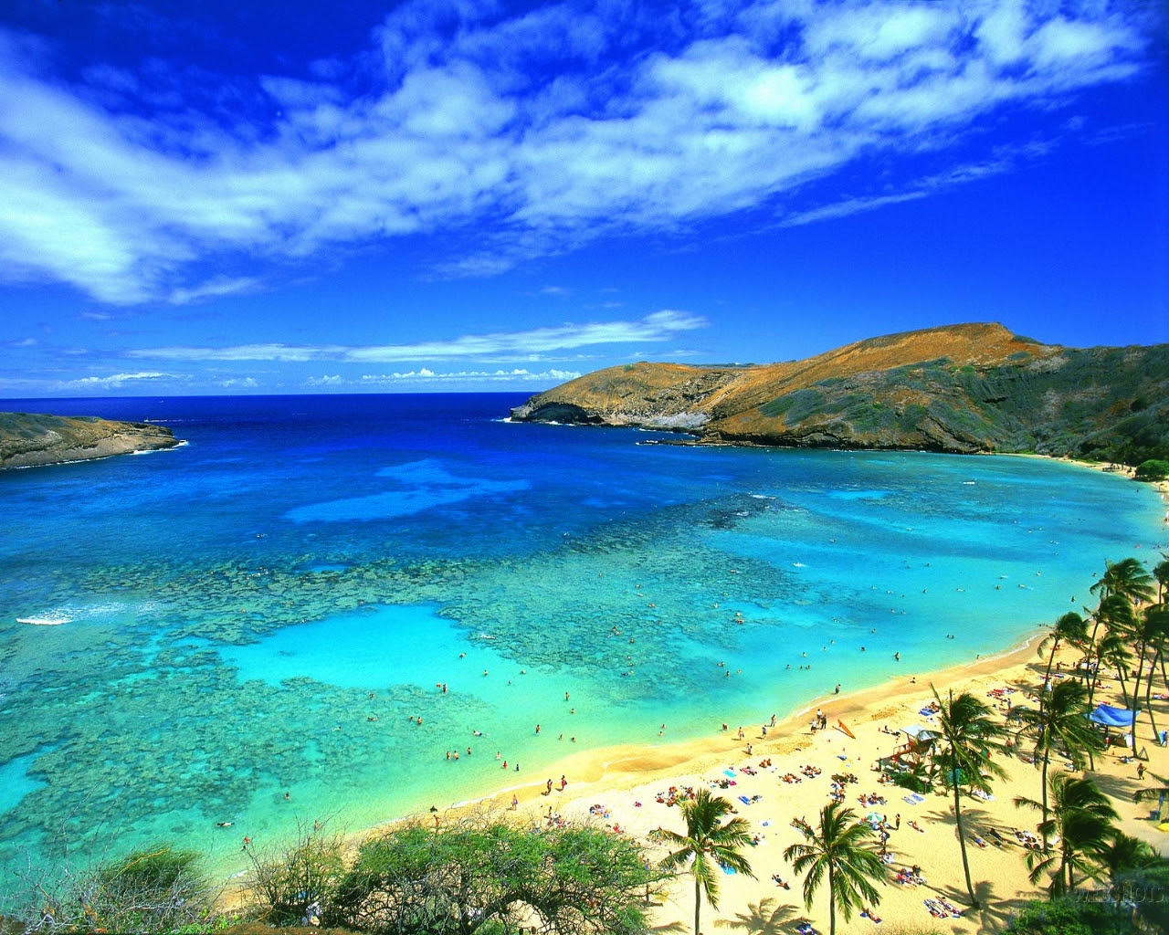 great beach hawaii picture