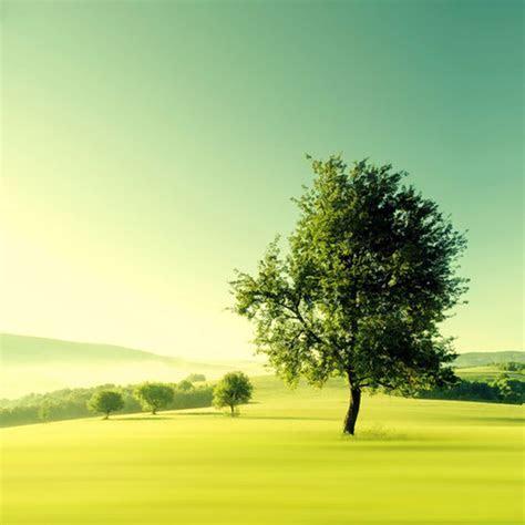pemandangan hijau padang rumput   wallpaper.sc Android
