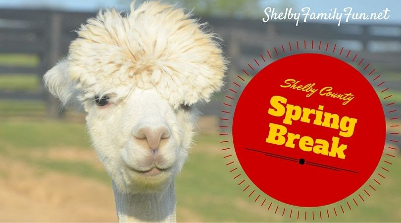 photo Spring Breakin Shelby Coun_zpsvtcz6ar1.jpg