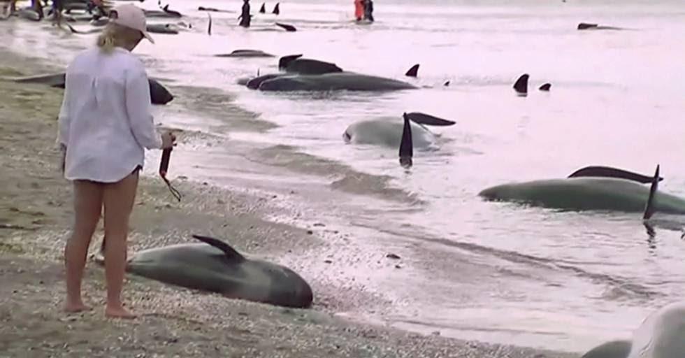 Uma turista observa uma baleia bebê morta na areia.