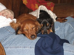 sweet doxies