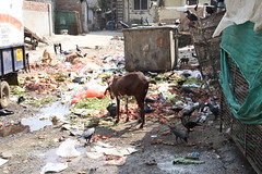 This is My Beloved Bandra Fucked Again For Another 5 Years by firoze shakir photographerno1