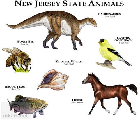 Related Keywords & Suggestions for nj state animal