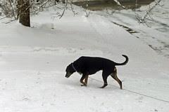 Lola_SNOW_3212