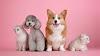 Nuevo marco legal para tener mascotas