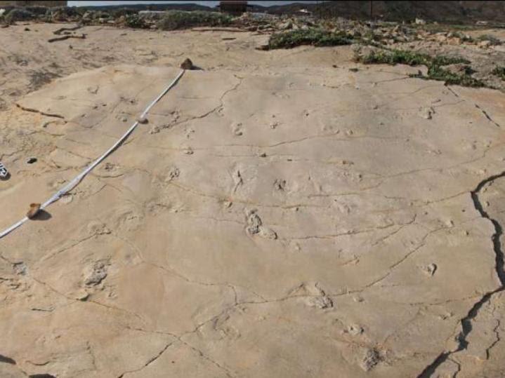 Crete empreintesfossiles 5 7ma1