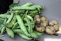 harvest 040
