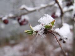 Winter into Spring by Teckelcar