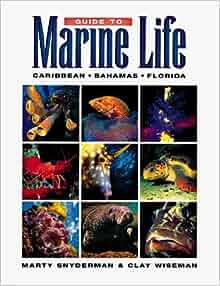 Guide To Marine Life CaribbeanBahamasFlorida