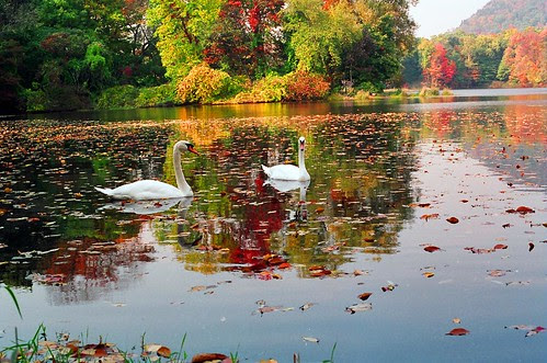 two swans in lake during fall
