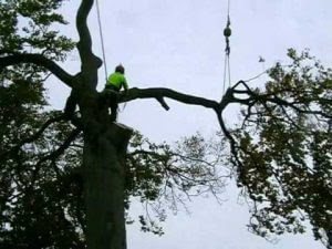 magas fa lebontása Sashalom