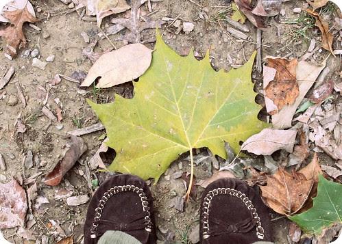 big leaf and shoes