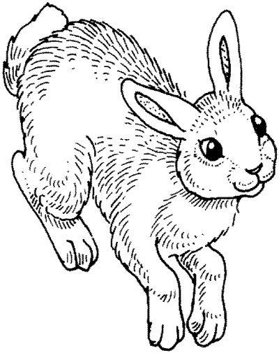 Dibujo De Conejo Dibujo Para Colorear De Conejo Dibujos Infantiles