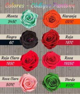 Rosas Eternas Rosas Preservadas Blog Amazoniaflor Mayoristas