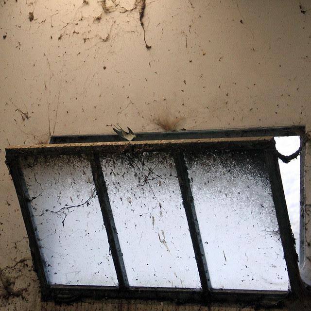 SWALLOW EMERGENCY WINDOW