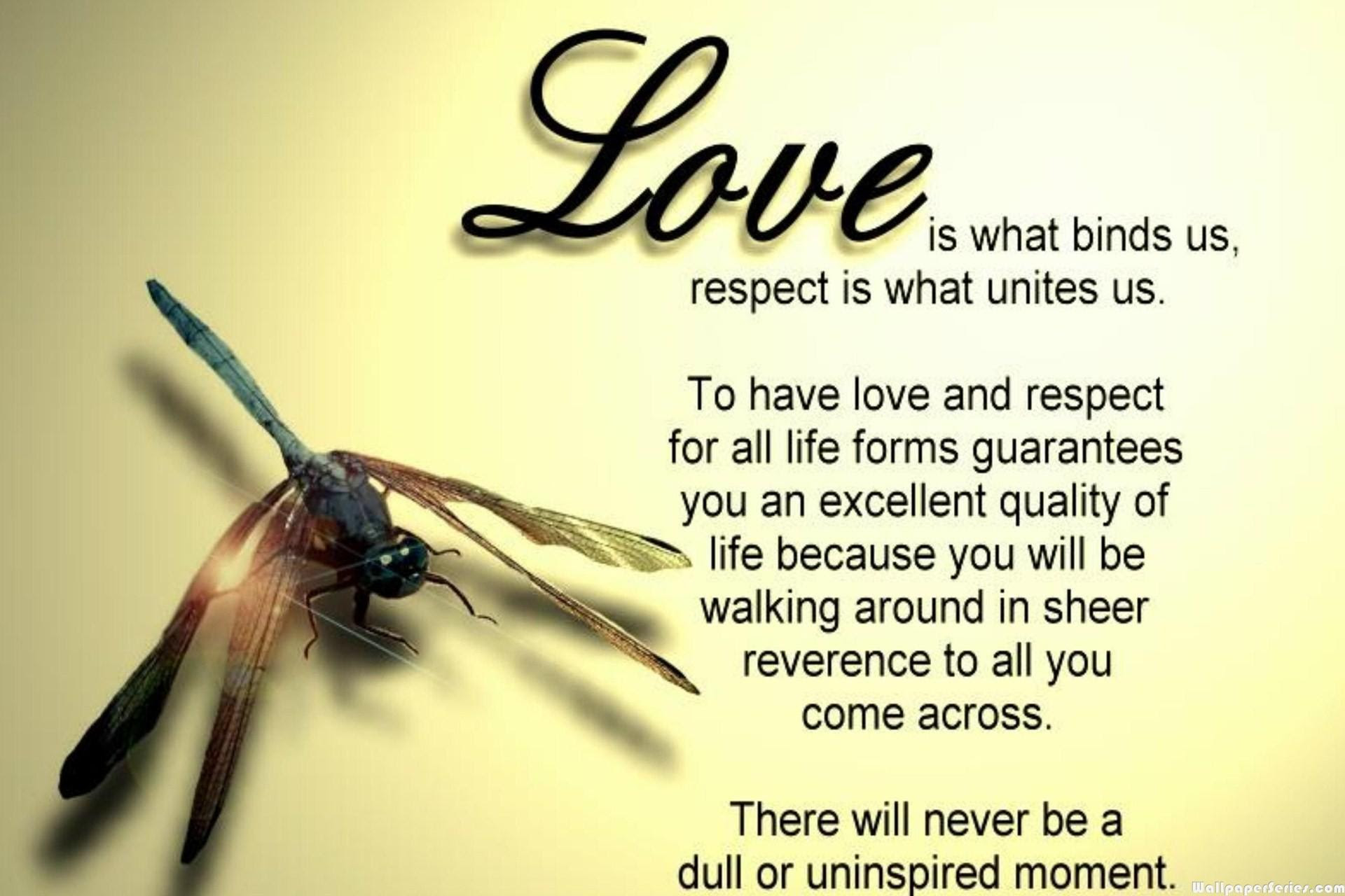 HD Amazing Love Quotes Wallpaper