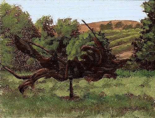 """Spinning Metal Dragon At The Di Rosa Preserve"""