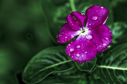 rainy day thursday