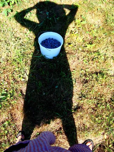 summer! blueberry mama