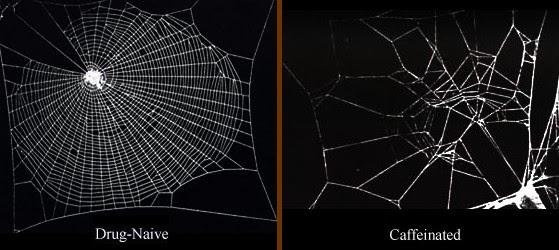 Spider caffeine before after photo