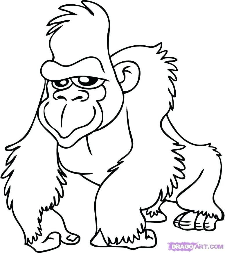 6300 Top Coloring Pages For Rainforest Animals Pictures