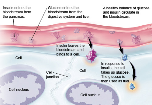 The Digestive System on emaze