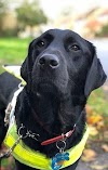 Su perro guía jamás se separó de ella hasta que hallaron su cuerpo sin vida