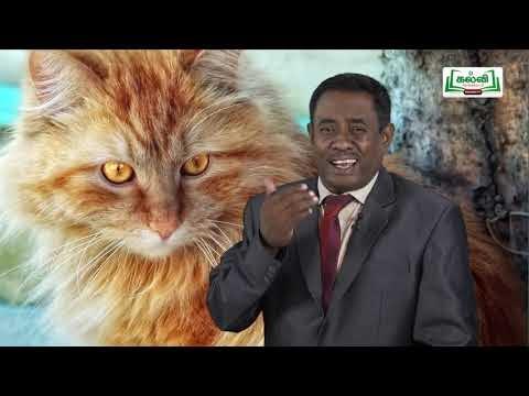 11th English Unit 4 Poem Macavity, The Mystery Cat Kalvi TV