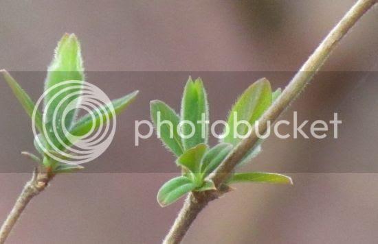 photo b4e32d2e-76cf-4d66-b589-fafbba0b7d5c_zpsfdb8604d.jpg