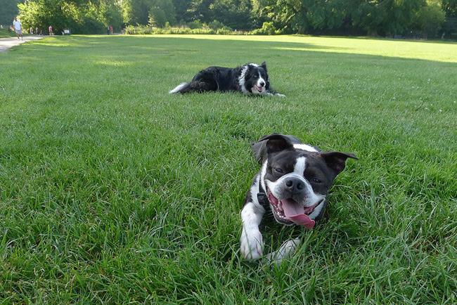 Dogs, Prospect Park