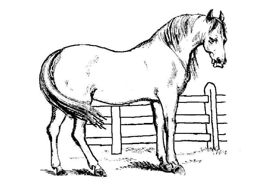 Ausmalbilder Pferde 1 Ausmalbilder Tiere