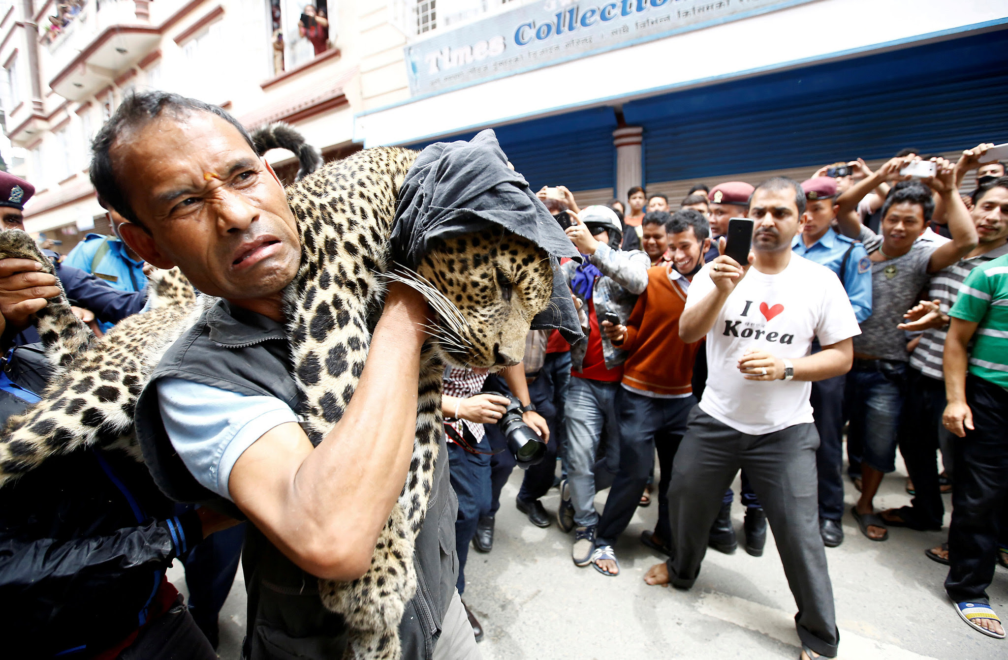 A tranquilized leopard is carried out from a house in Kathmandu, Nepal June 1, 2016. REUTERS/Navesh Chitrakar      TPX IMAGES OF THE DAY