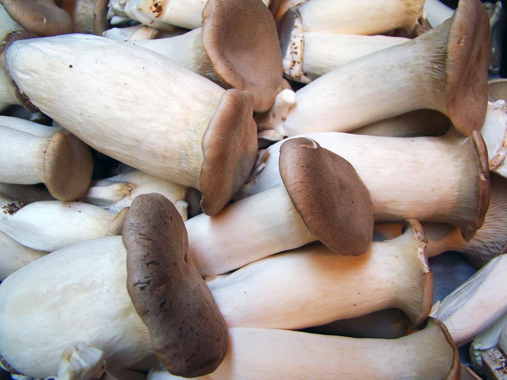 DSC03139 King Trumpet Mushrooms