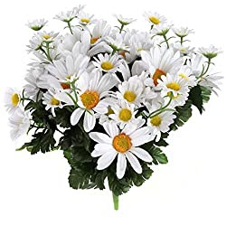 January 28 is National Daisy Day