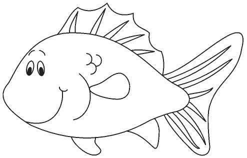 animales marinos02