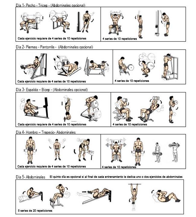 dieta de entrenamiento con pesas para perder grasa