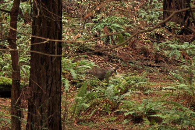 Very well camuflaged deer