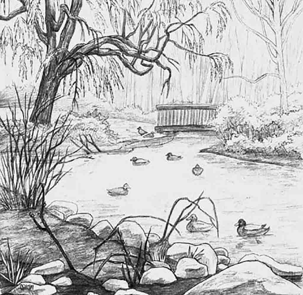 Nature Beginner Easy Pencil Drawings