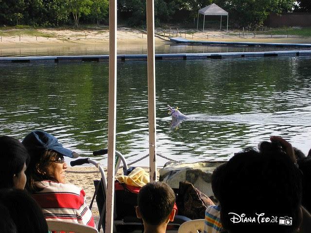 Underwater Sentosa Island