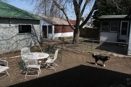 Bare Backyard