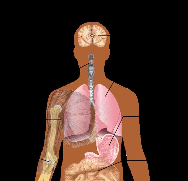 Fail:Symptoms of swine flu.svg