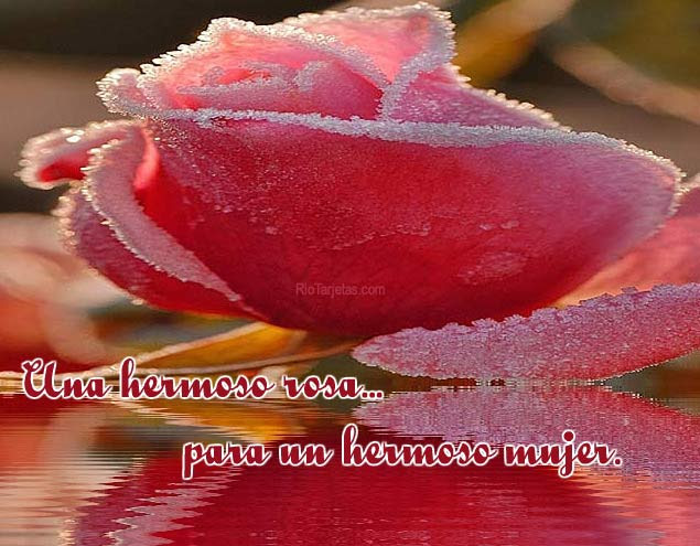 Rosa Para Un Hermoso Mujer Rio Tarjetas Para Mujeres