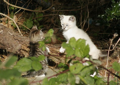 Kitten Face-Off in the Woods