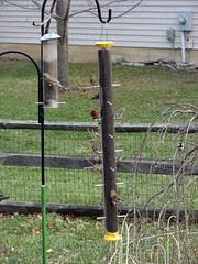 5 on the big feeder