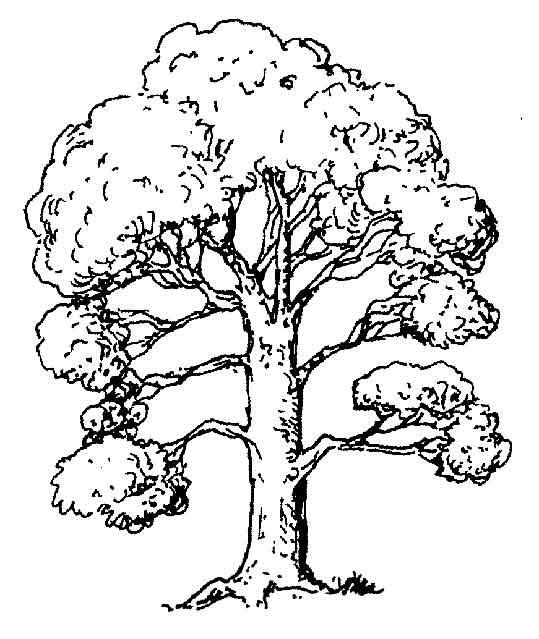 Agaclarnet Ağaç 1