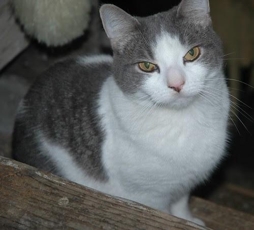 Romeo, a Cat