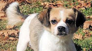 Adoptable Animals December 17, 2014 [Pictures]