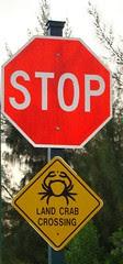 Land crab crossing