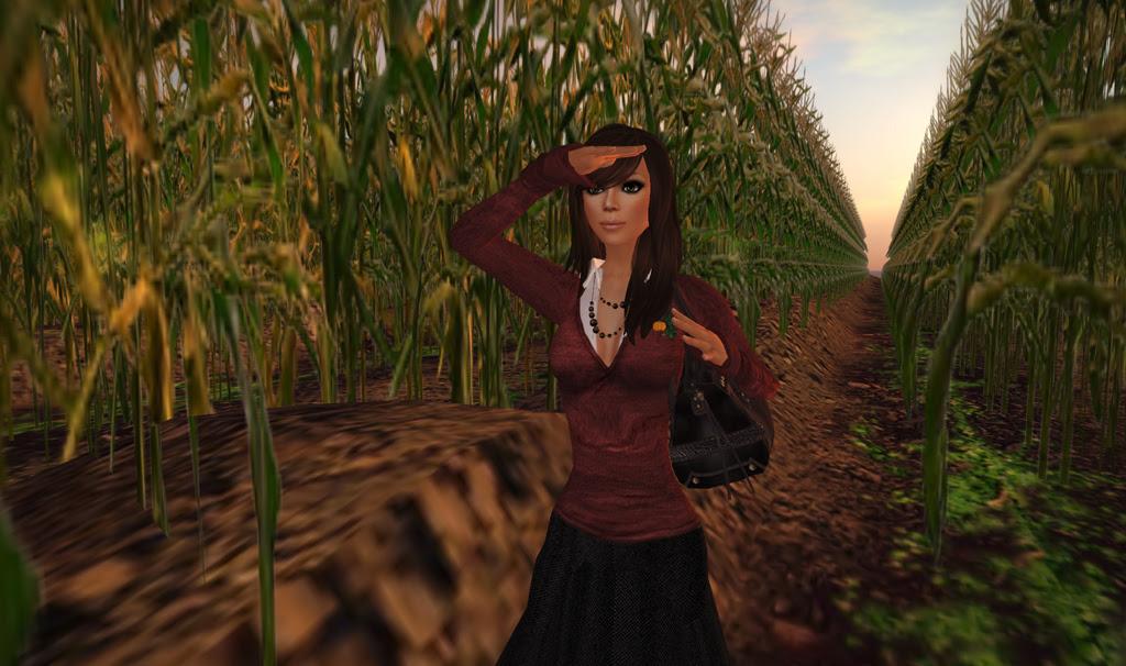 The Corn Field 2